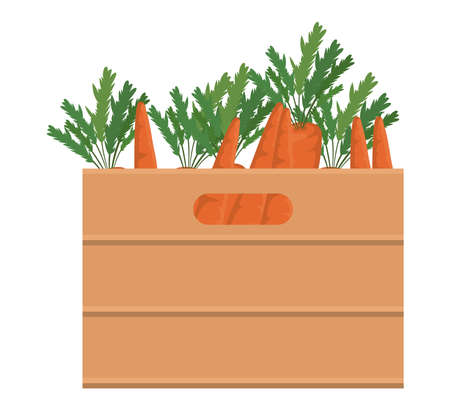 carrots inside box design, Vegetable organic food healthy fresh natural and market theme Vector illustration