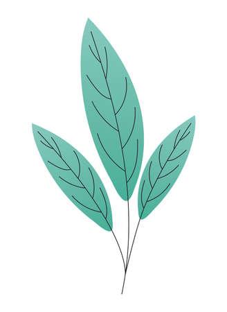 leaves of a green color vector illustration design