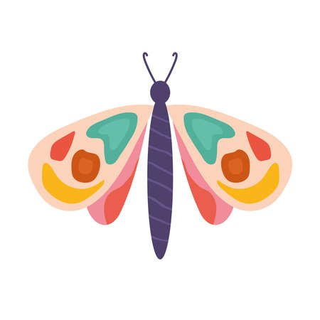hand drawn butterfly in a white background vector illustration design