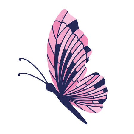 butterfly on a white background vector illustration design Illustration