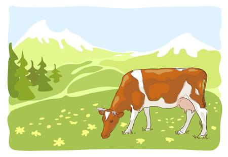 The white and red cow is grazed on the Alpine meadow. Vector illustration.