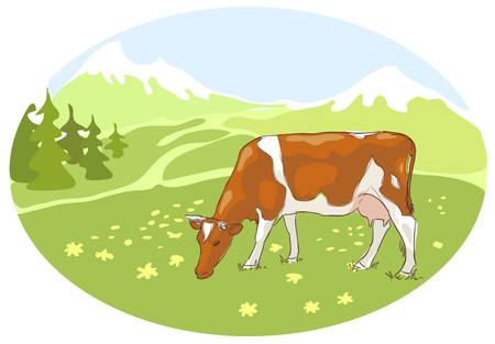 The white and red cow is grazed on the Alpine meadow.  Vector illustration. Vector