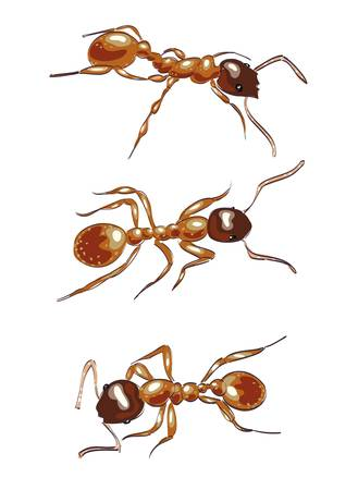 Red ants. Isolated on white background. Vector illustration.