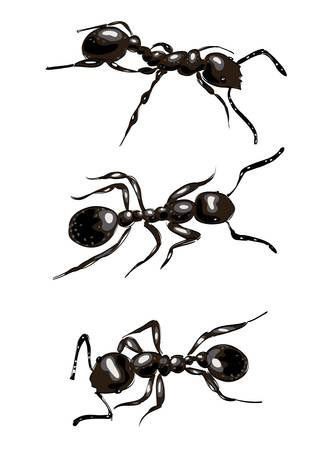 crawling: Black ants. Isolated on white background. Vector illustration.