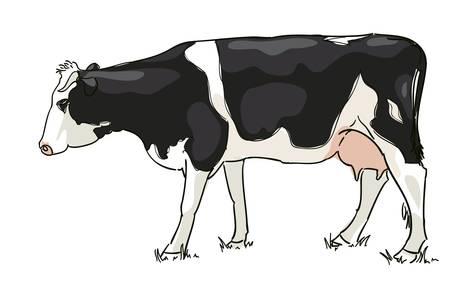 De witte en zwarte koe wordt beweid. Vector illustratie.