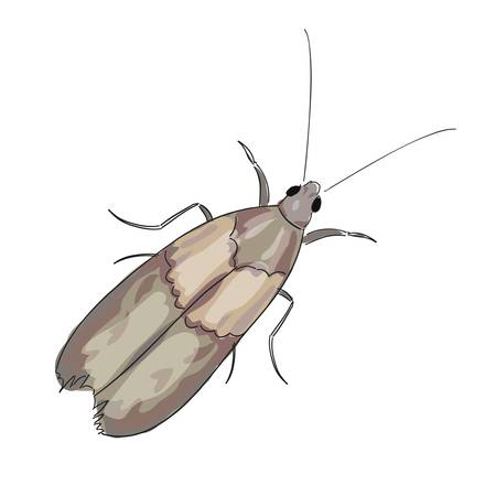moth: Moth on a white background. Vector illustration.