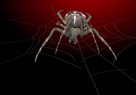 Portrait scary spider. Vector illustration. Stock Vector - 15908335