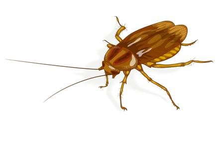 revolting: Cockroach. Vector illustration.