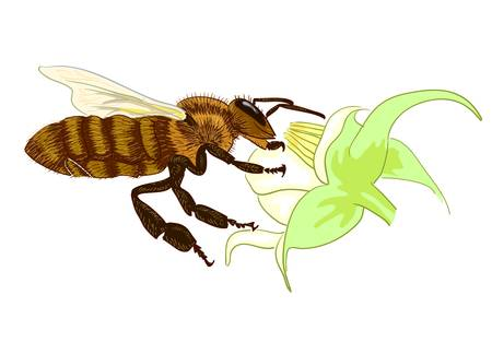 Bee. Vector illustration. Stock Vector - 17860914