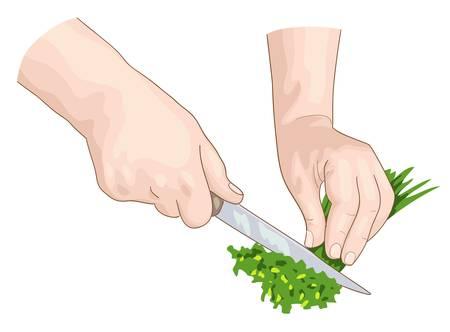 Chef hands Stock Vector - 18344153