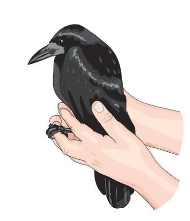ornithologist: The Crow and the hands. Vector illustration.