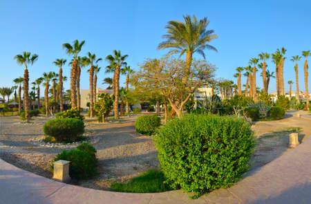 Beautiful Green Garden in an Egyptian hotel.