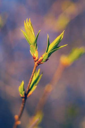 밝은 녹색 지점 복사본 공간이 모호한 bokeh 배경에 나뭇잎