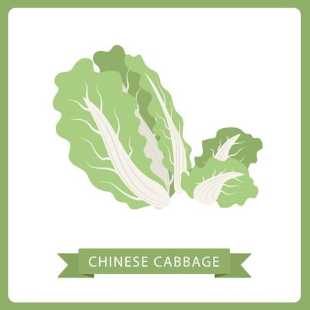 Abstract vector icon illustration logo for whole ripe vegetable chinese cabbage, green rolls leaf on background.