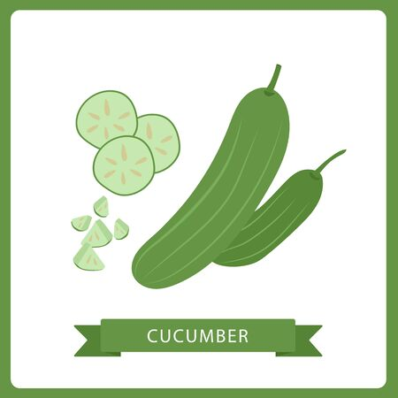 cucumber whole and slices isolated on white background. Vector illustration. Healthy food design. ingredients for cooking.