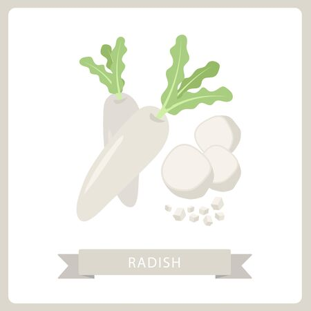 Radish fresh natural vegetable, hand drawn vector illustration isolated on white background