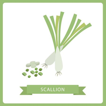 Vector realistic illustration of spring onion. Nature organic vegetable Scallion green onion, healthy vector colorful food vegetable spice ingredient. Ilustração