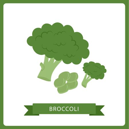 Bright vector collection of colorful broccoli. Fresh cartoon different vegetable isolated on white background.