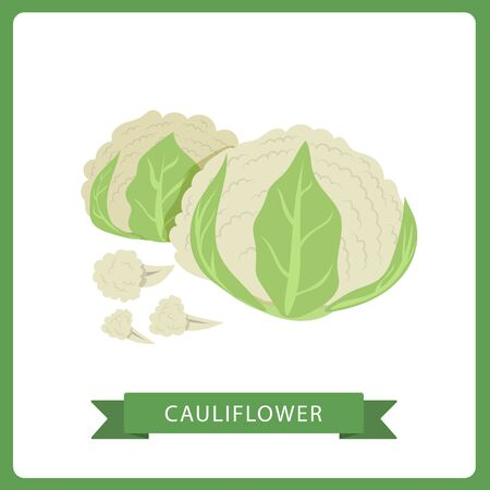Cauliflower set. Organic food concept. Vector illustration, on white background. Ilustração