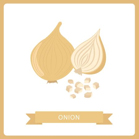 onion set. Cut in half, slice and onion rings. Isolated vector illustration, Isolated on white background.