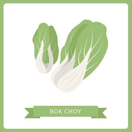 vector Bok Choy isolated, on white background