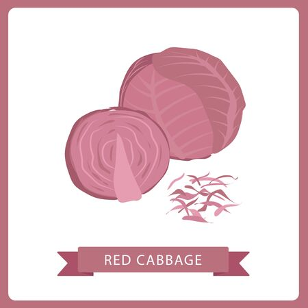 Vegetable, Vector Illustration of Delicious Fresh Red Cabbage Isolated on White Background.