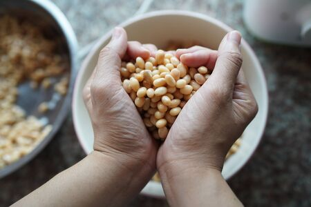 Soybean in hand heart before make soy milk.