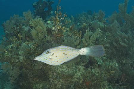 reef fish: Tropical fish at Coral Reef Stock Photo
