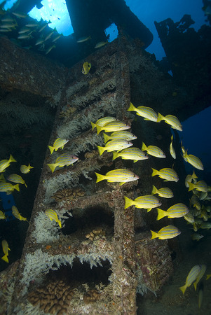 ship wreck: Fish Swimming Hawaii Underwater Ship Wreck Dive Site