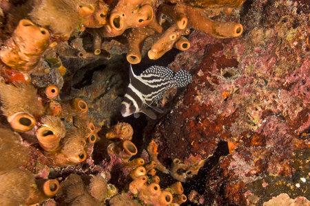 Key Largo Reef Fish at Coral Reef