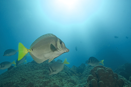 Tropical fish at Cabo San Lucas Coral Reef