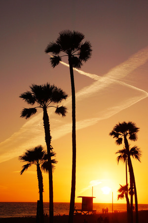 California Beach Sunset With Palm Trees Stock Photo Picture And Royalty Free Image 38944386