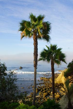 california beach: Palm trees at California beach Stock Photo