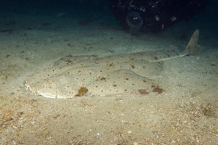 Shark on ocean floor at Pacific Ocean