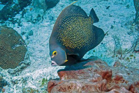 cozumel: Fish at Cozumel, Mexico Stock Photo