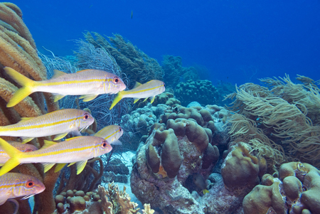 salt water fish: Fish school swimming at coral reef