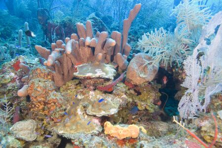 warm water fish: Coral reef at tropical island