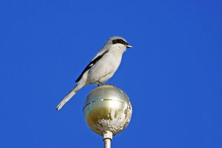 flag pole: Bird at flag pole at California Poppy Reserve Stock Photo