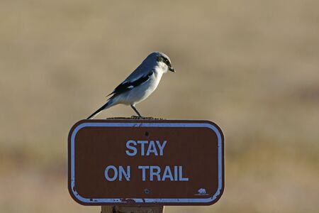trail sign: bird on trail sign Stock Photo