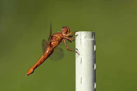 Dragon fly insect up close