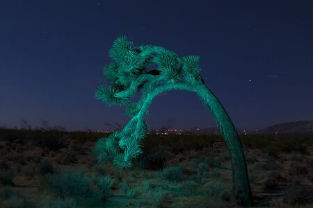 joshua: Desert landscape joshua tree with light painting Stock Photo