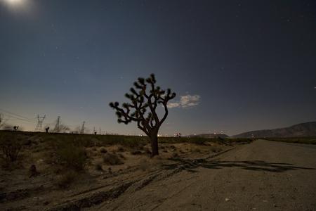 Desert landscape at night with moon lit  joshua tree shadow