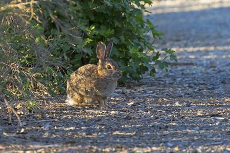 Rabbit hiding in th eshadows at Los Angeles park