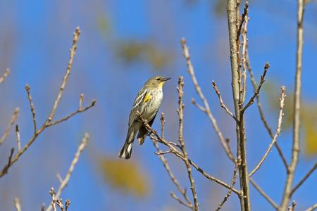 Park bird at tree limb perch