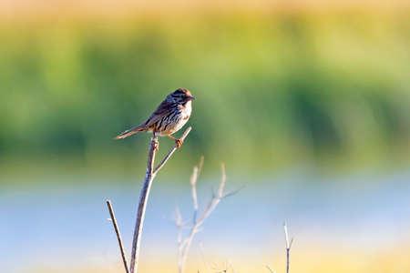Bird along California wetlands