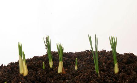 shoots: Nuevas plantas brotes  Foto de archivo