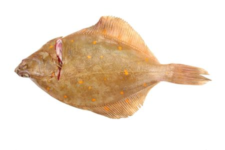 plaice: Plaice flat fish isolated on white Stock Photo
