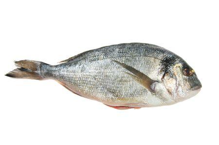 dorsal: Gilt cabeza besugo pescado aislados en blanco  Foto de archivo