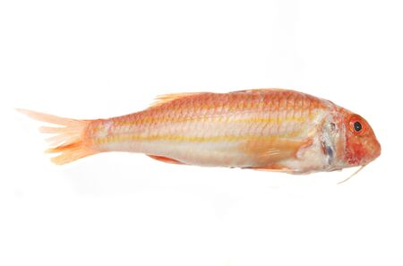 mullet: Red Mullet fish isolated on a white background