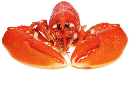 Close up of a cooked lobsters claws